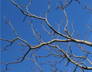 tree-limbs